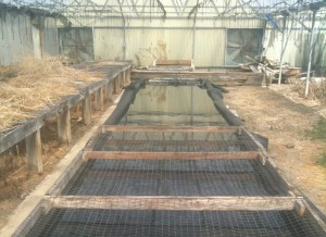 Approximately 75'x8' raceway in a community scale aquaponics system
