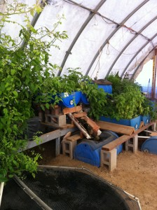 Small Community Scale Aquaponics Systems at WorldWide Aquaculture