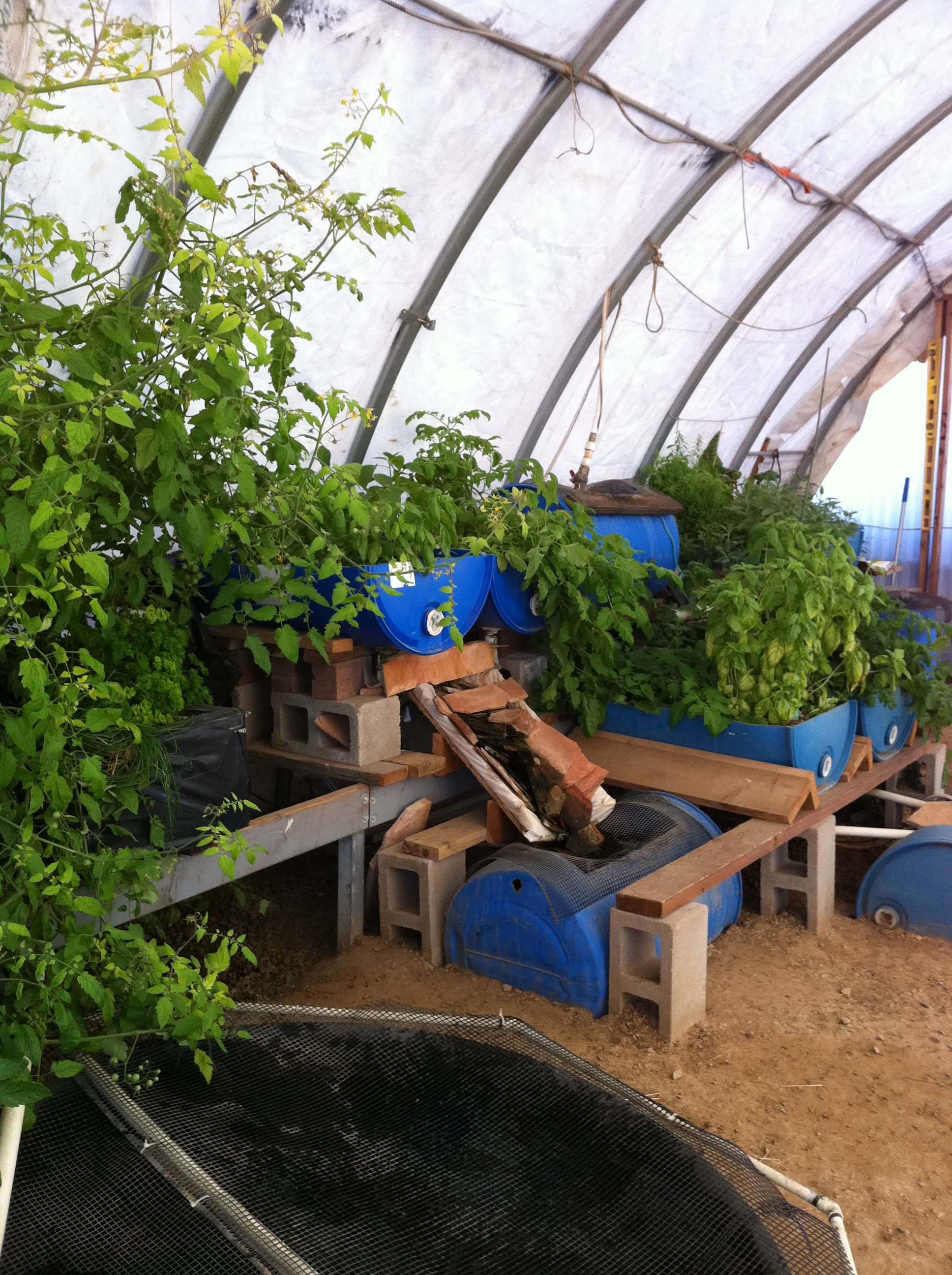 Can Aquaponics be Financially Viable?