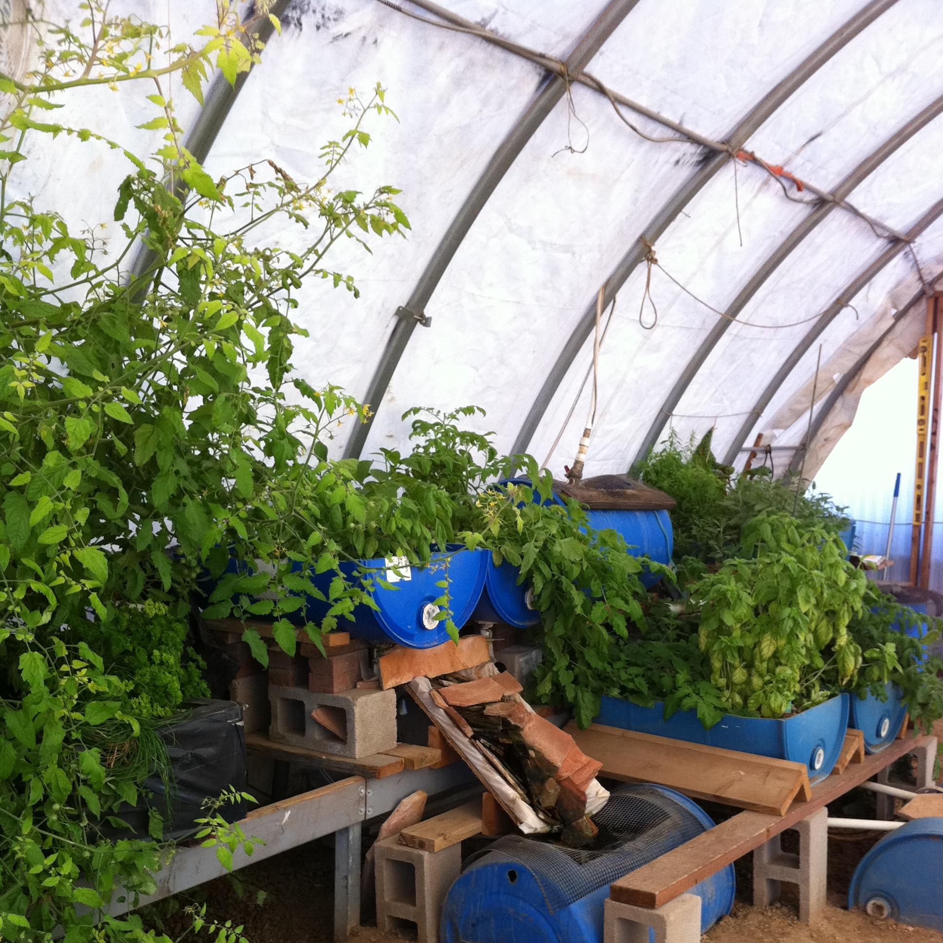 Can Aquaponics be Financially Viable? Seven Years after we First Asked – Do We Know Now?