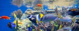 honolulu-aquarium-tropical-1461583-h