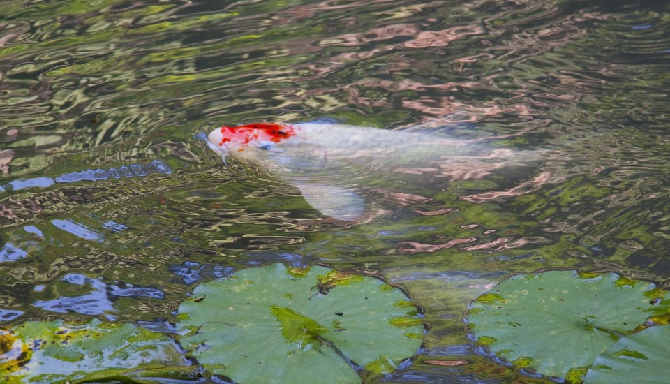 A Guide To Building A Fish Pond Growing Fish In Your Home Pond Worldwide Aquaculture