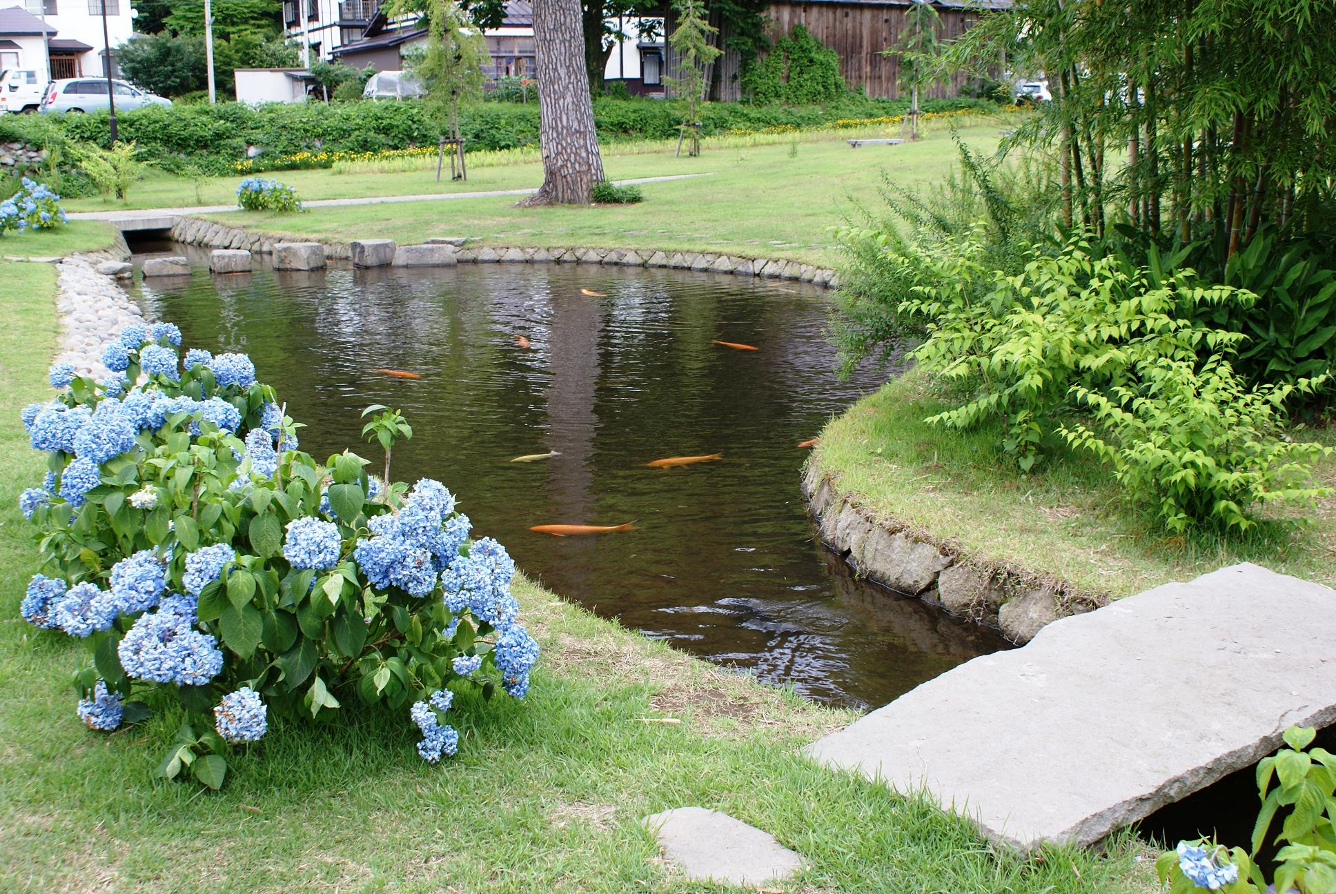 Backyard fish farming raise fish in your home pond for Garden pond design and construction