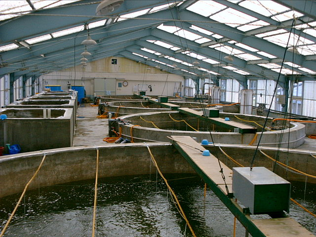 smallscale Freshwater Fish Farming  Journey To Forever