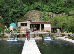 Zapotec_fish_farm_in_Ixtlan_Oaxaca