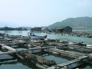 aquaculture-china-fishfarm-4325672-o
