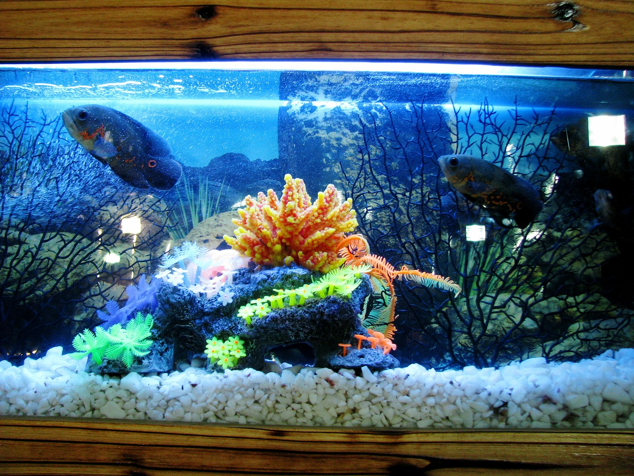 Fish aquarium business - Aquarium 390745_1280