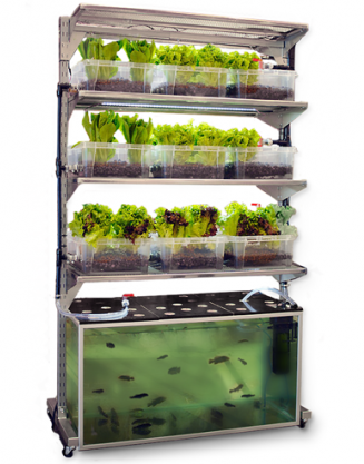 Integrated fish farming benefits of polyculture for Self sustaining fish tank