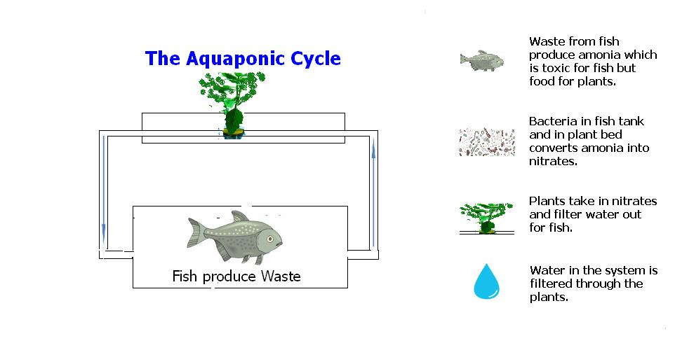 Aquaponic Farming System – Grow Your Own Food