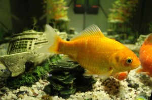 fish-563637_1280