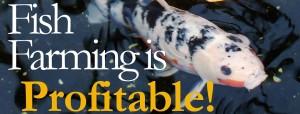 fish farming profit
