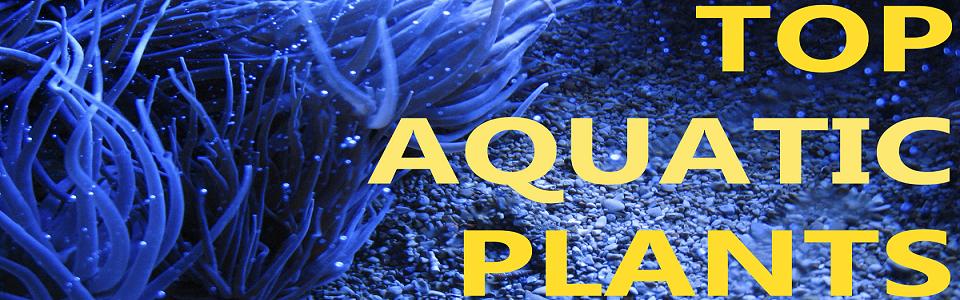 Top 5 Aquatic Plants for your Fish Tank or Aquarium