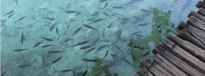 Sustainable-Aquaculture-and-Consulting-5-1024x380