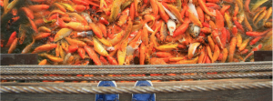 Sustainable-Aquaculture-and-Consulting-6-1024x380