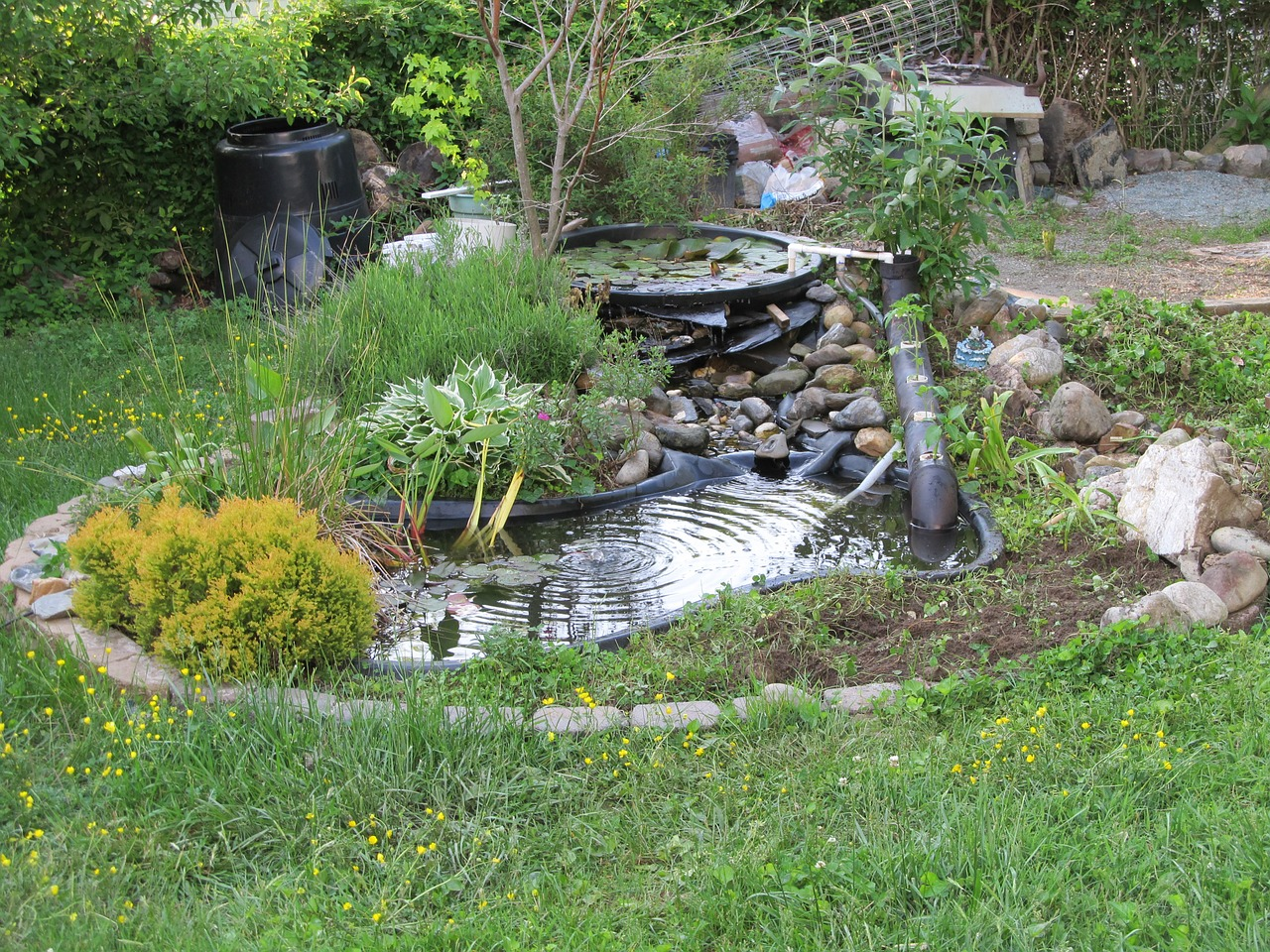Diy build a natural fish pond in your backyard for How to build a koi pond on a budget