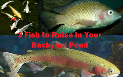 3 Fish to Raise in Your Backyard Fish Pond