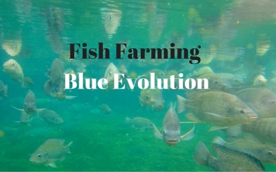 Fish Farming – What's good about Blue Evolution