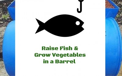 How to Raise Fish & Grow Vegetables Anywhere at Home in a Barrel