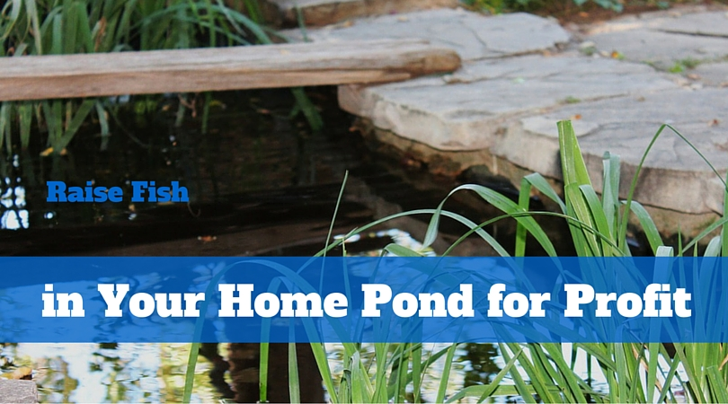 Raise Fish in Your Home Pond for Profit