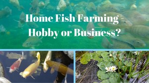 home fish farming
