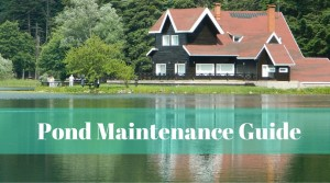 Spring pond maintenance