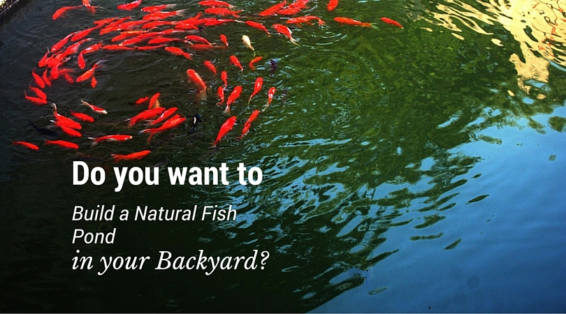 Do you want to build a natural fish pond in your backyard for Garden pond do you need a pump