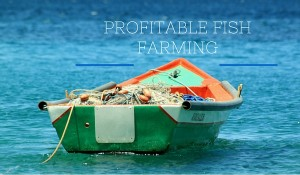 Profitable Fish Farming
