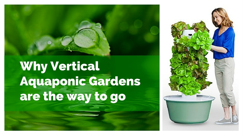 Why Vertical Aquaponic Gardens are the way to go