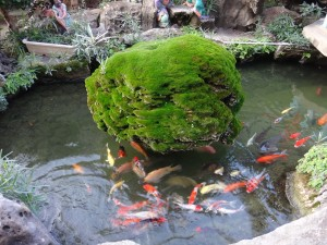 Do you want to build a natural fish pond in your backyard for Natural fish pond