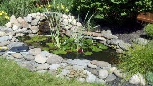 natural fish pond