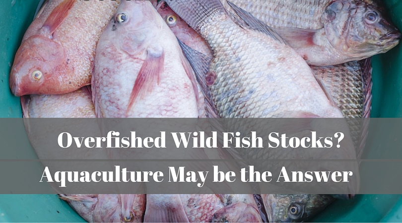 Overfished Wild Fish Stocks? Aquaculture May be the Answer