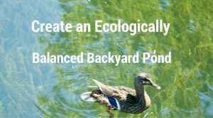 Ecologically Balanced Backyard Pond