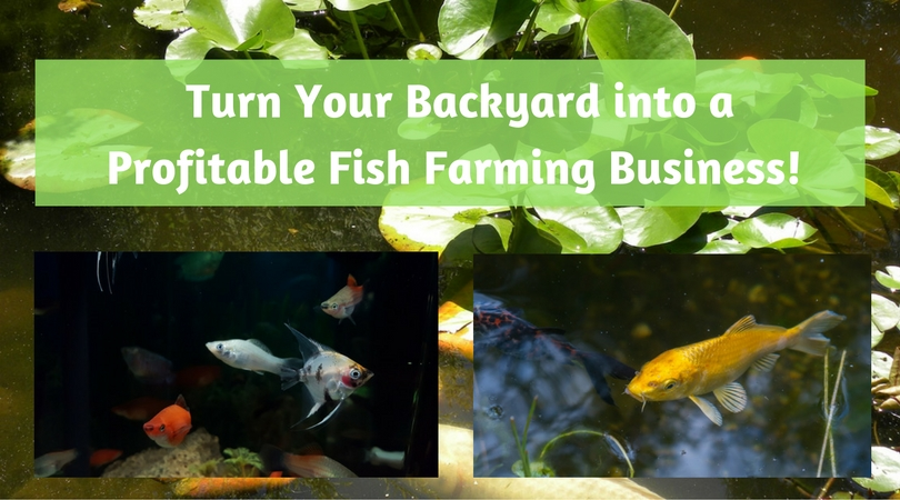 Turn Your Backyard into a Profitable Fish Farming Business