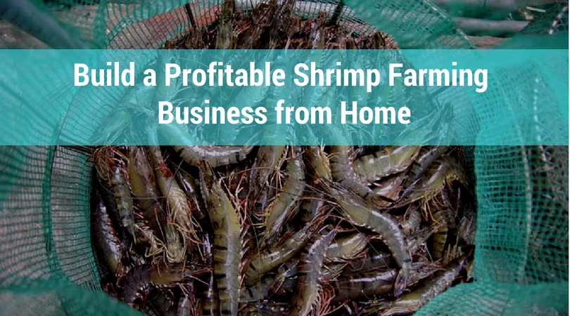 Build a Profitable Shrimp Farming Business from Home