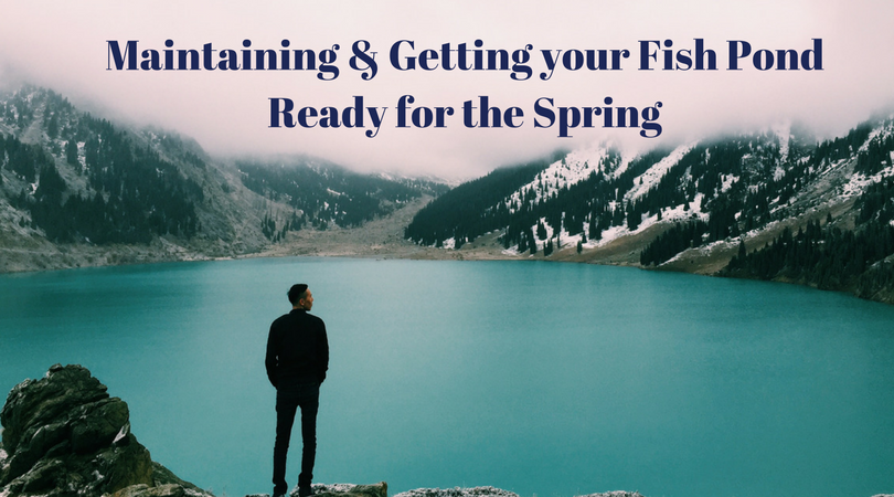 Maintaining & Getting your Fish Pond Ready for the Spring