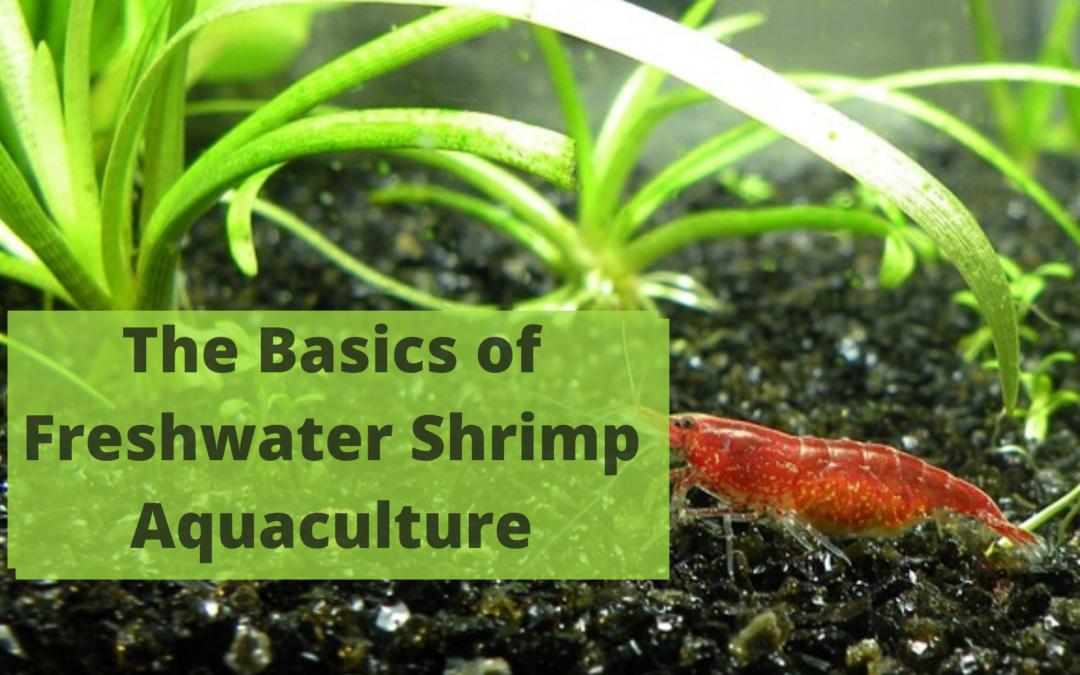 The Basics of Freshwater Shrimp Aquaculture