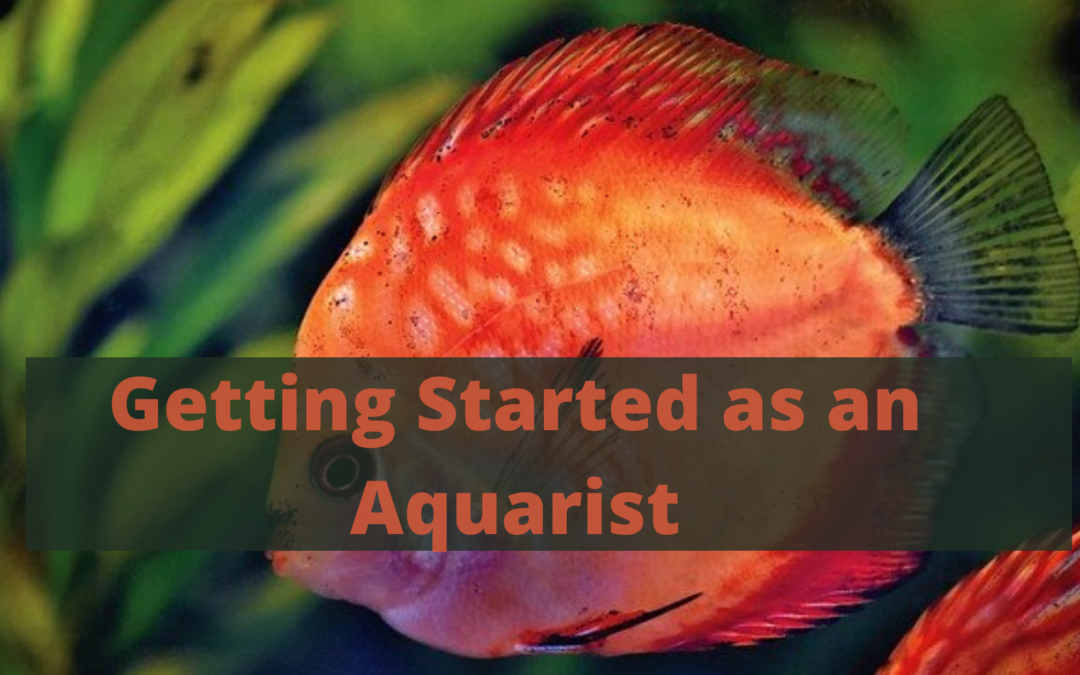 Getting Started as an Aquarist