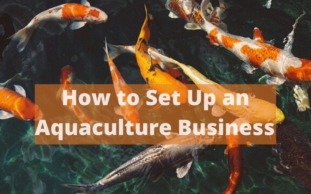 How to Set Up an Aquaculture Business