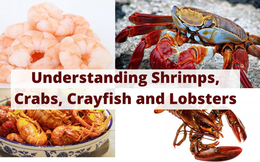Understanding Shrimps, Crabs, Crayfish and Lobsters