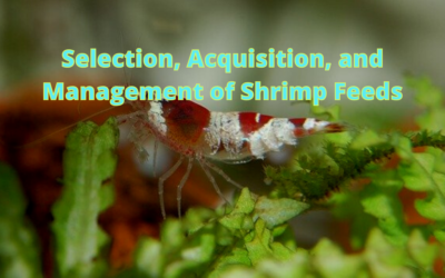 Selection, Acquisition, and Management of Shrimp Feeds