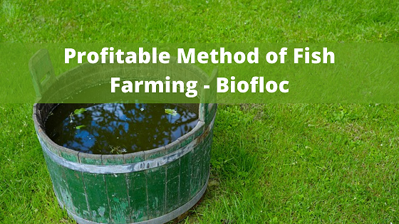 Profitable Method of Fish Farming – Biofloc