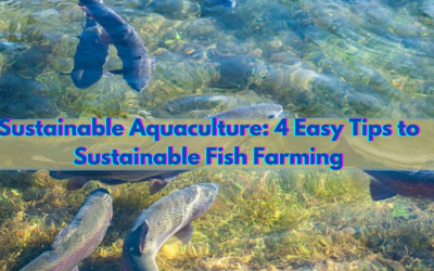 Sustainable Aquaculture: 4 Easy Tips to Sustainable Fish Farming