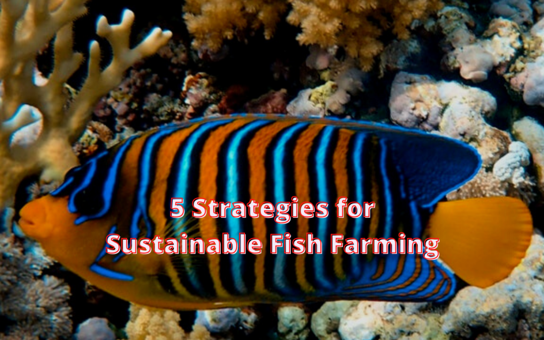 5 Strategies for Sustainable Fish Farming