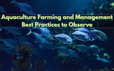 Aquaculture Farming and Management Best Practices to Observe