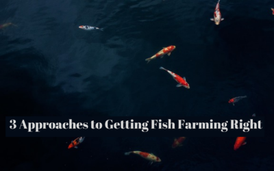 3 Approaches to Getting Fish Farming Right