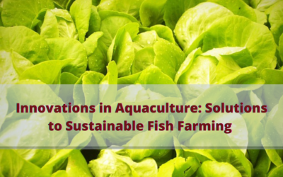 Innovations in Aquaculture: Solutions to Sustainable Fish Farming