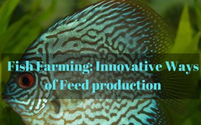 Fish Farming: Innovative Ways of Feed production