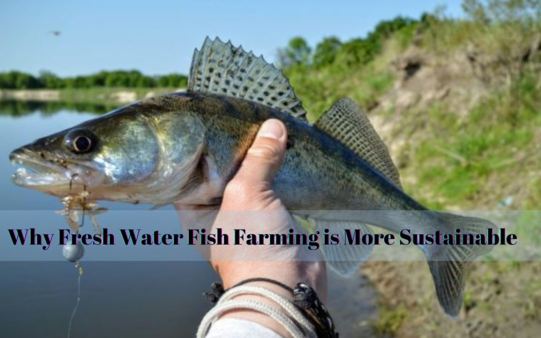 Why Fresh Water Fish Farming is More Sustainable