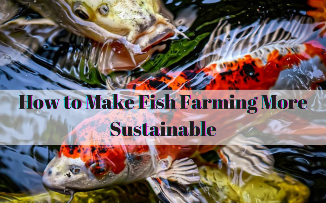 How to Make Fish Farming More Sustainable