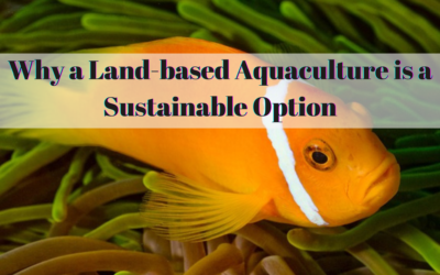 Why a Land-based Aquaculture is a Sustainable Option
